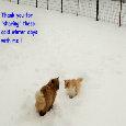 Home : Events : Winter  [Dec 21 - Mar 19] - Winter Cats.