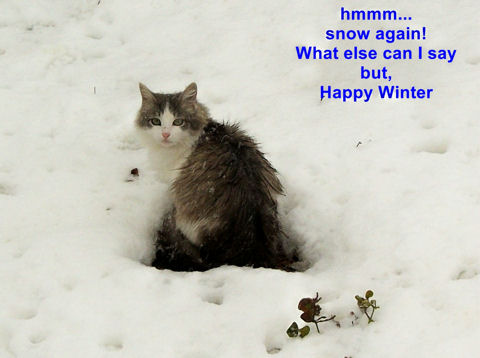 Happy Winter Cat.