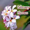 Home : Events : February Flowers 2018 [February] - Beautiful Day With Beautiful Flowers!