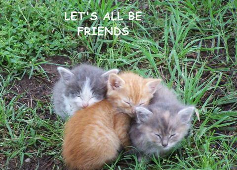 Friendship Kittens.