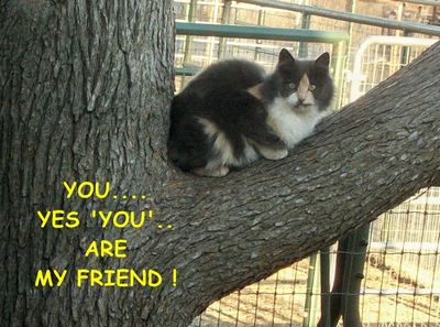 Friendship Tree Kitty.