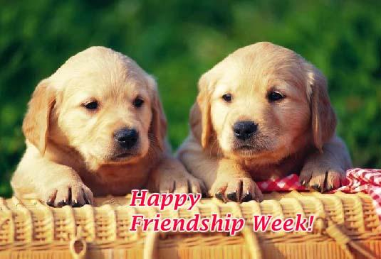 Send Intl. Friendship Week Day Greetings!