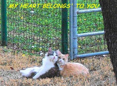 Your Heart Is Mine Cats.