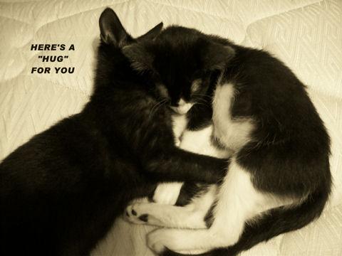 Hug Day Cats.