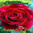 A Beautiful Rose...
