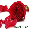 Happy Rose Day.