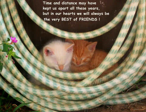 Friend Day Card Kittens.
