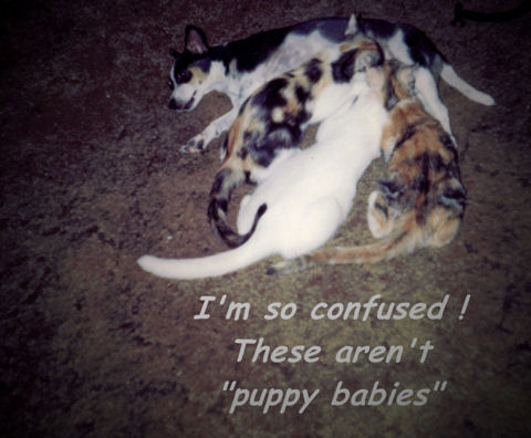 Insane Day Kitties.