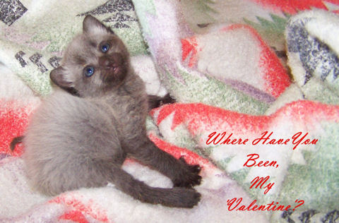 My Valentine Kitten.