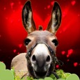 Donkey's Valentine Song For You.
