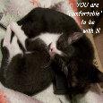 Valentine Kittens, For Her.