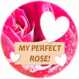 My Perfect Rose.