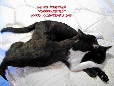 Valentine Cats.