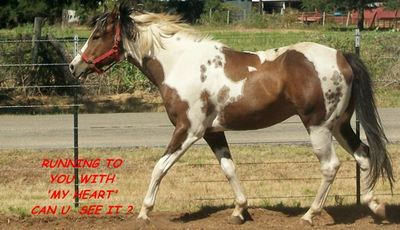 Heart Horse.