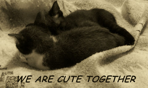 Cute Together Kittens.