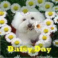 Happy Daisy Day Wishes!