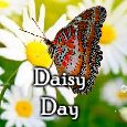 Day Of Dreams And Daisies!