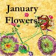 Warm Wishes With January Flowers!