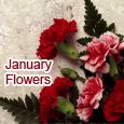 Home : Events : January Flowers 2019 [January] - Sending Beautiful Carnations!