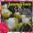Home : Events : January Flowers 2019 [January] - Anuary Flowers Still Feels Cold.