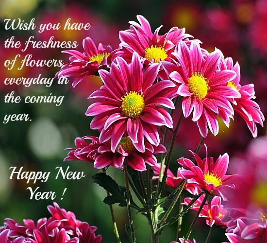 fresh flowers for the new year free flowers ecards greeting cards 123 greetings