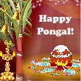 Home : Events : Pongal 2018 [Jan 14] - Wealth And Prosperity To All!