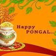 Harvest Pongal.