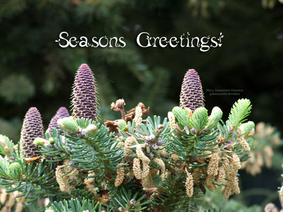 Seasons Greetings.