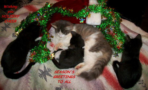Holiday Cheer Cats.