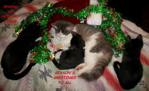 Holiday Cheer Cats.