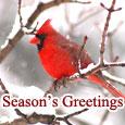 Home : Events : Season's Greetings  [Dec - Jan] - Pleasant & Beautiful!