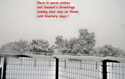 Winter Wishes For You.