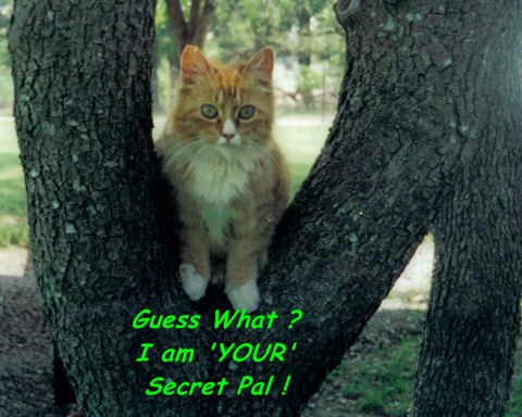 Secret Pal Day, Cat.