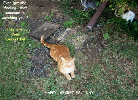 Secret Pal Cat.