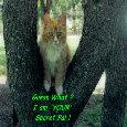 Secret Pal Day, Cat.