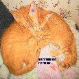 Cute Hugging Cats.