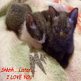 Home : Events : Whisper 'I Love You' Day 2018 [Jan 19] - Whispering Love Cats.