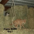 Barn Day Cats.