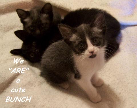 Sibling Kittens.