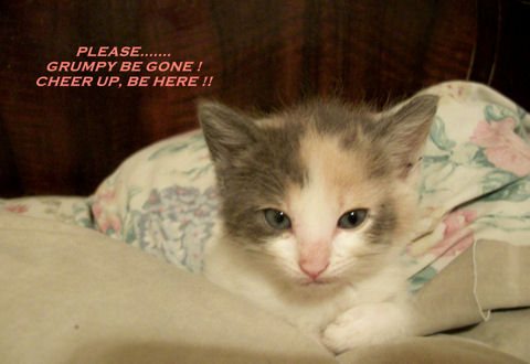 Cheer Up Kitten.