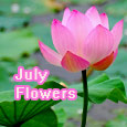 Beautiful Lily Welcoming July!