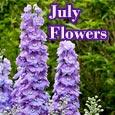 Lovely Larkspur Flowers...