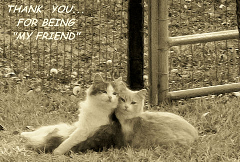 Best Friends Thank You Cats!