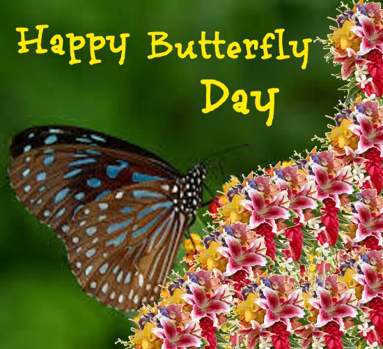 Happy Butterfly Day To All.
