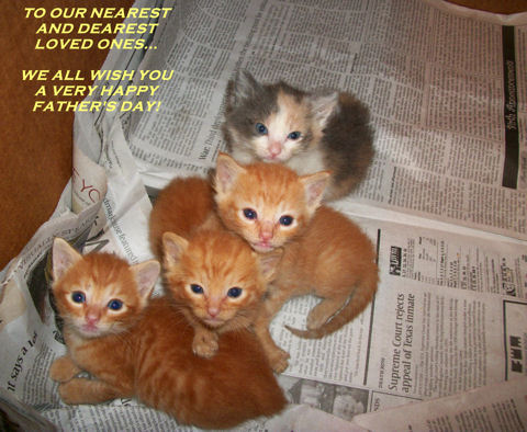 Father's Day Near And Dear Kittens.