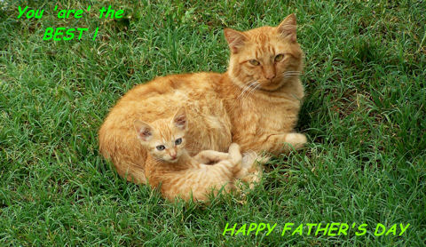 Father's Day Cat.