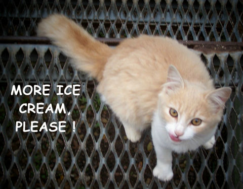 Where Is My Ice Cream, Kitty?