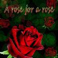 Red Rose Festival.