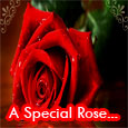 A Special Rose...