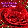 Celebrate Red Rose Festival.